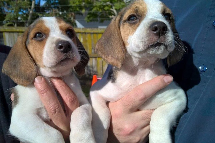 beagle pups get new names