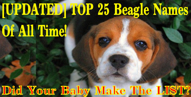 top 25 beagle names