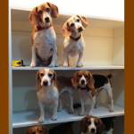 beagle name 19 hope