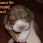 beagle name 23 calypso