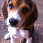 beagle names number 25 unouno