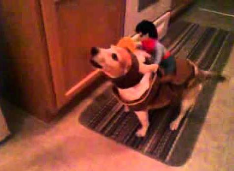 a buckin beagle