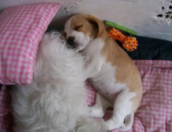 aaa lemon baby pup