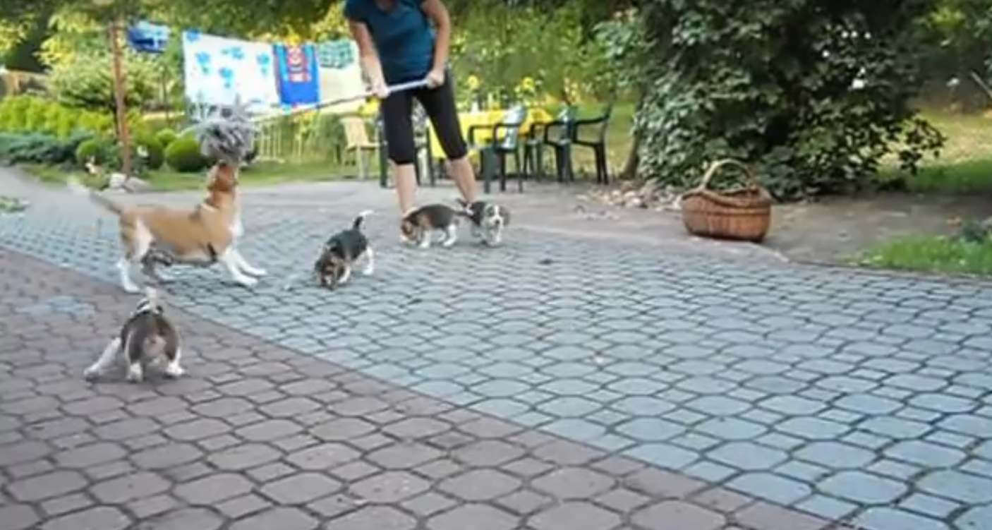 beagle mop