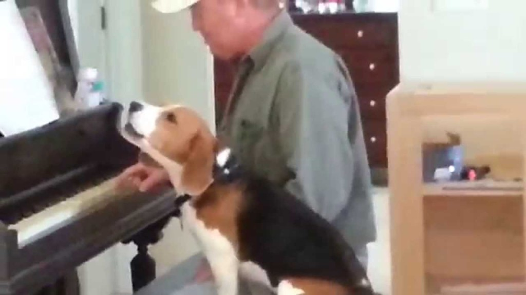 Beagle And Dad Singing Oh Christmas Tree Together