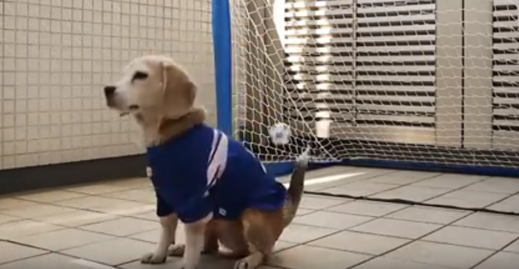 beagle goalie2