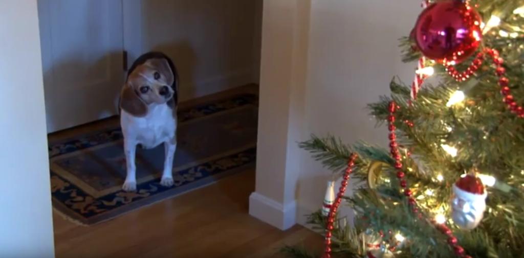 beagle xmas 3