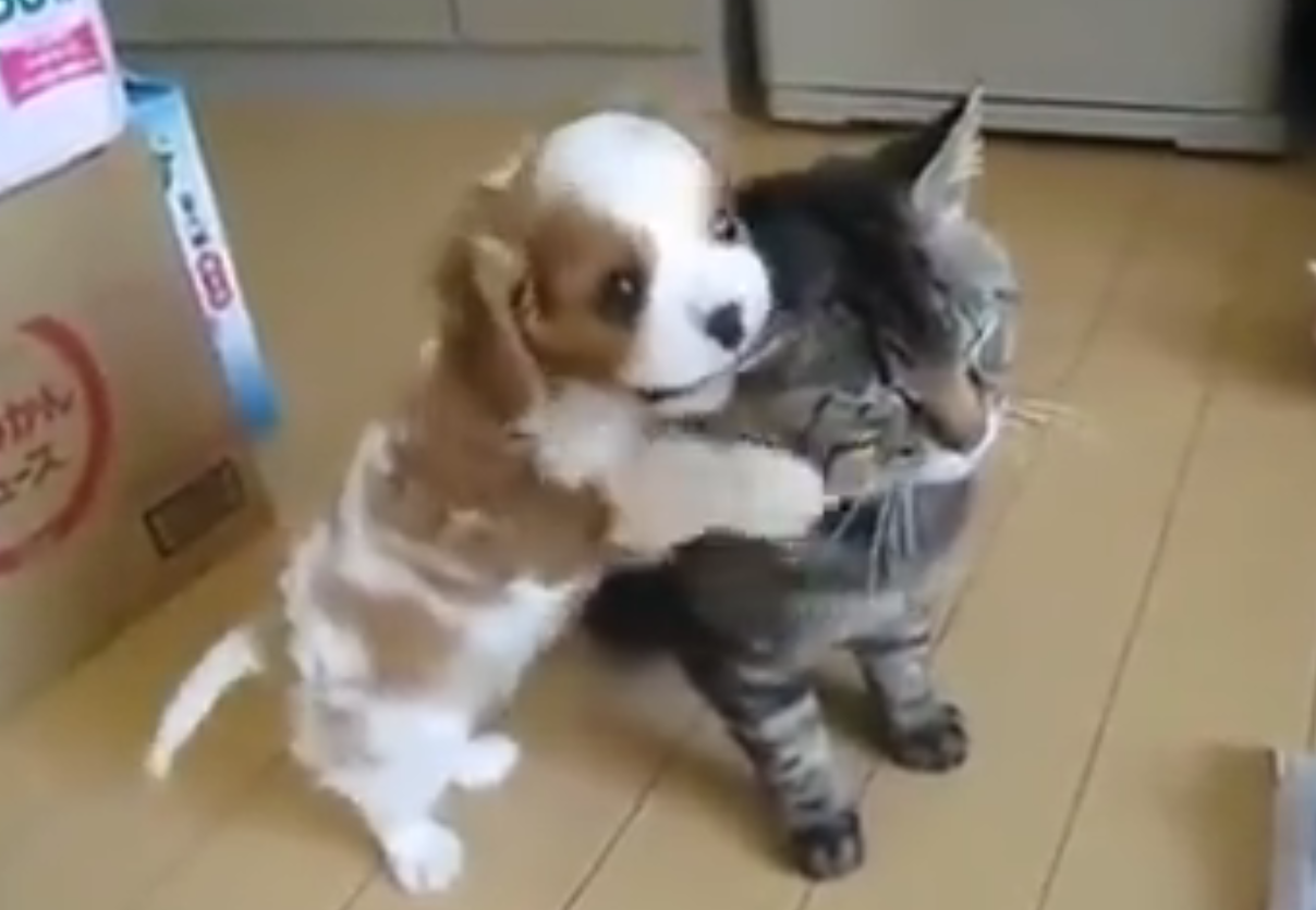 beagle pup and kitten
