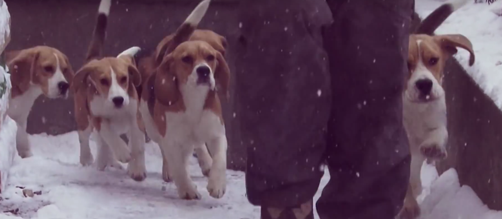 beagle pup first snow pups2