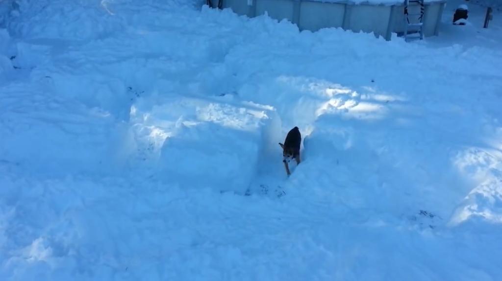 beagle pup first snowmaze1