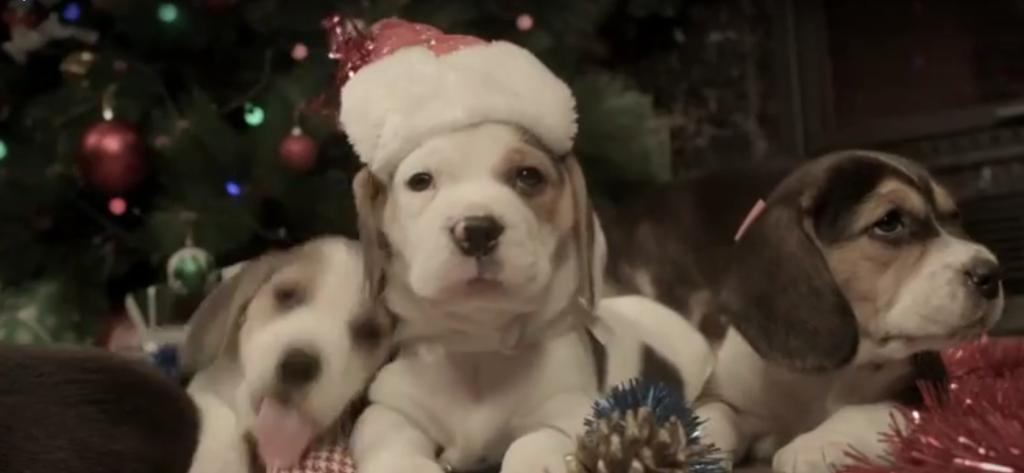beagle pup xmas