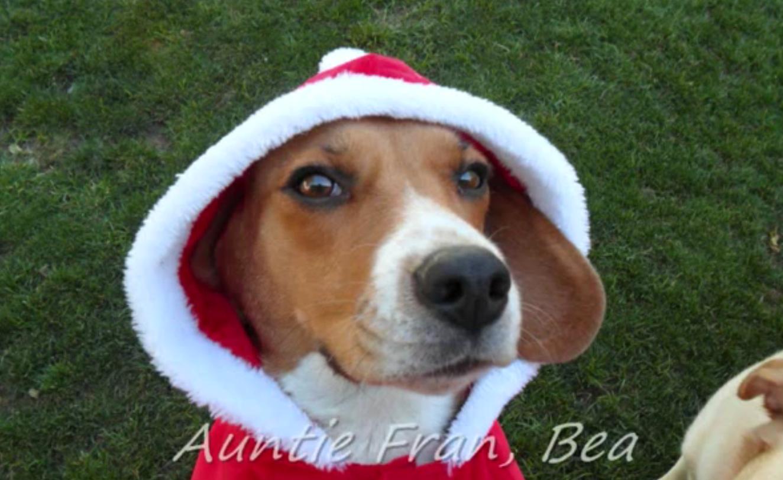 feliz navida beagle