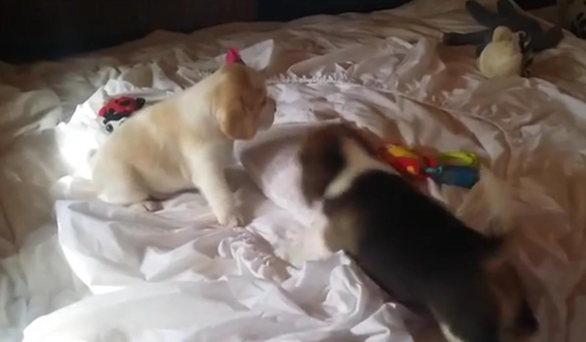 pup battle