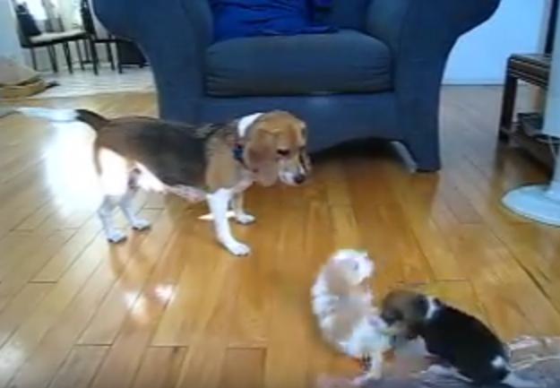 pups and mama