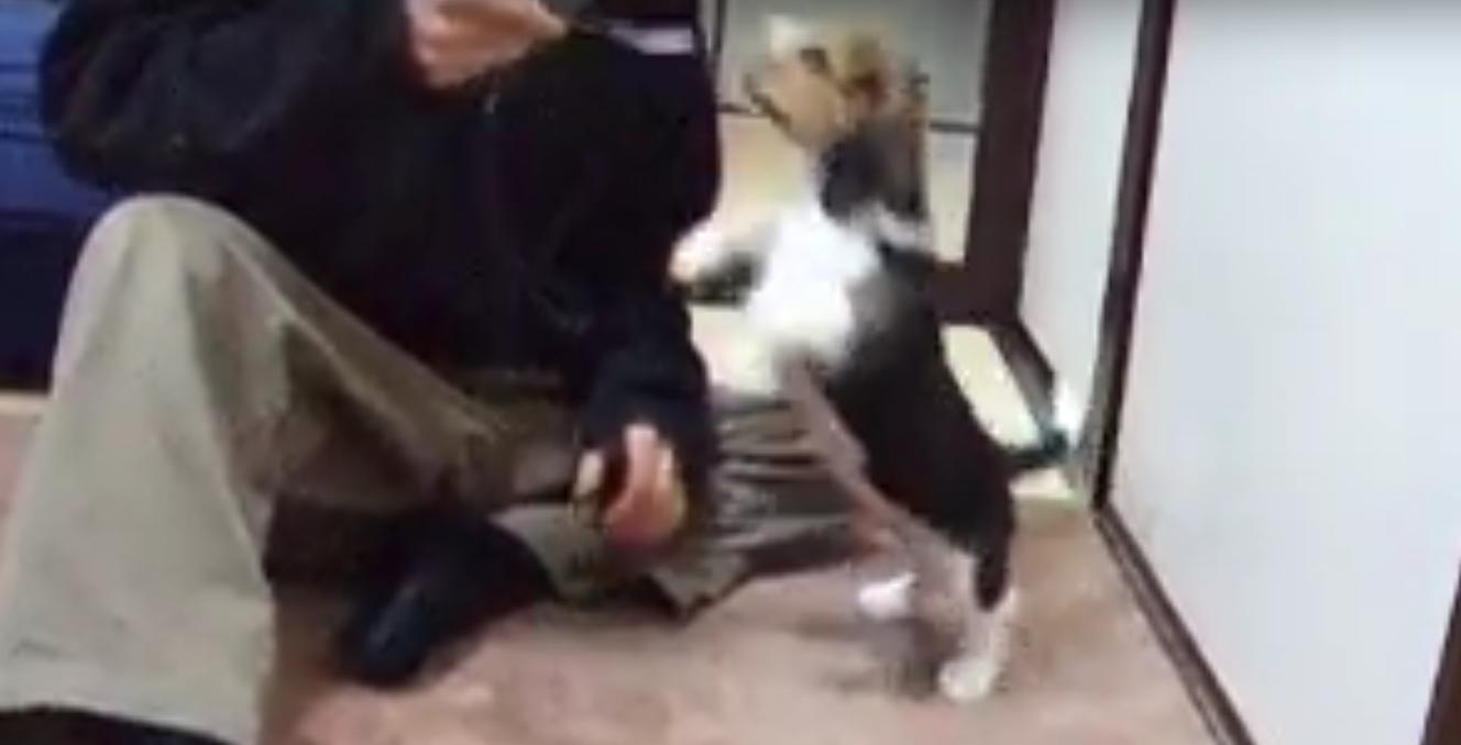 beagle pup kaiser