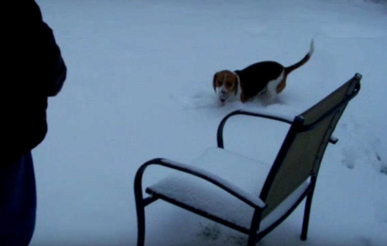 beagle snow