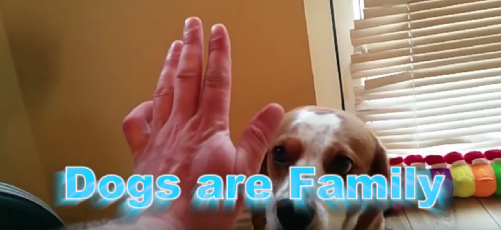 beagles are family
