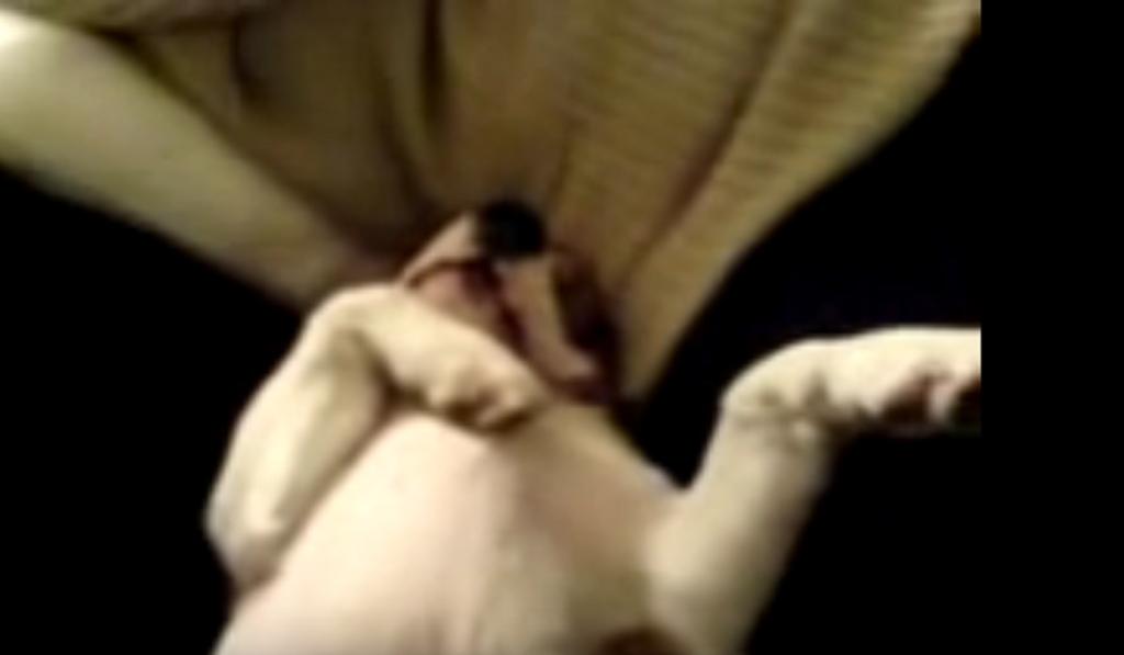 a beagle pup snore