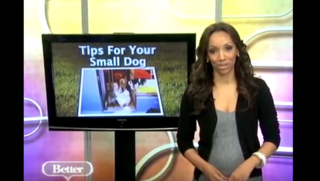 beags SMALL DOG TIP