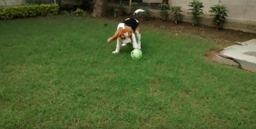 pup ball