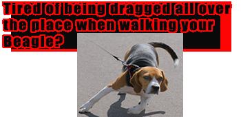 beag-drag-ad