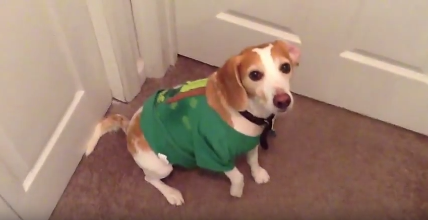 a st paddy pup